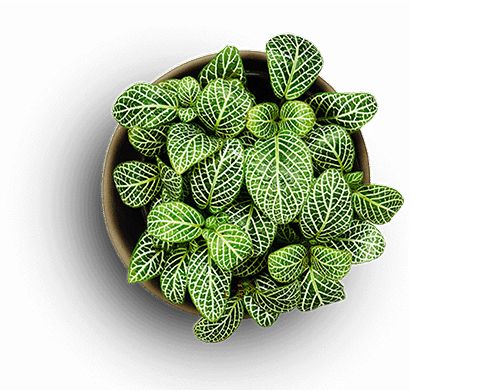 ReigNN Plant